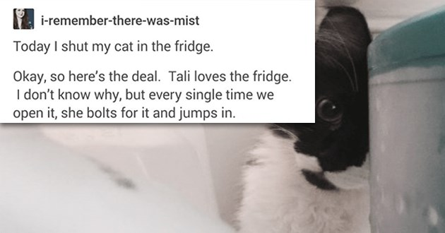 "wholesome and funny tumblr thread of a cat who loves being inside the fridge - thumbnail of cat inside in the fridge ""Today I shut my cat in the fridge. Okay, so here's the deal. Tali loves the fridge. I don't know why, but every single time we open it, she bolts for it and jumps in."""