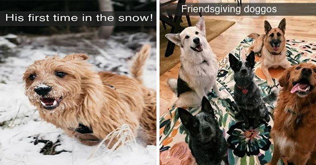 "uplifting pure and wholesome dog snapchats - thumbnail includes two images one of a dog seeing snow for the first time and one of a group of dogs ""friendsgiving doggos"""