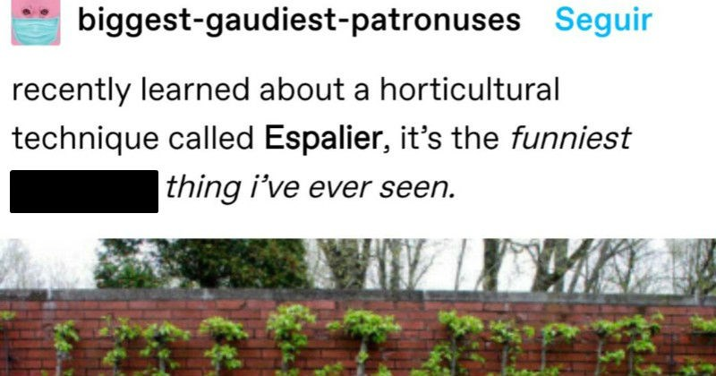 A funny Tumblr post about a strange horticultural technique that flattens trees | biggest-gaudiest-patronuses Seguir recently learned about horticultural technique called Espalier s funniest goddamn thing ever seen.