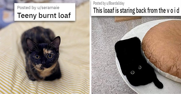 "list of cat loaves - thumbnail of two cat loaves, one a ""Teeny burnt loaf"" and the other black loaf ""This loaaf is staring back from the v o i d"""