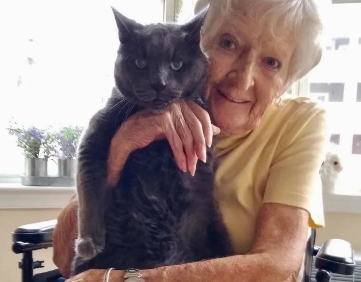 shelter senior cat is adopted by a senior woman who completes him - thumbnail of senior cat with senior woman