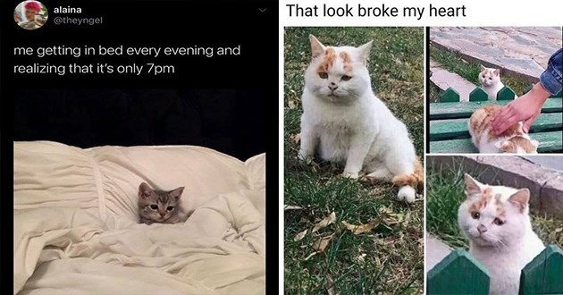 "fresh cat memes every caturday - thumbnail includes two memes one of a cat tucked in bed ""me getting in bed every evening and realizing that it's only 7pm"" and one of a cute orange kitten ""that look broke my heart"""