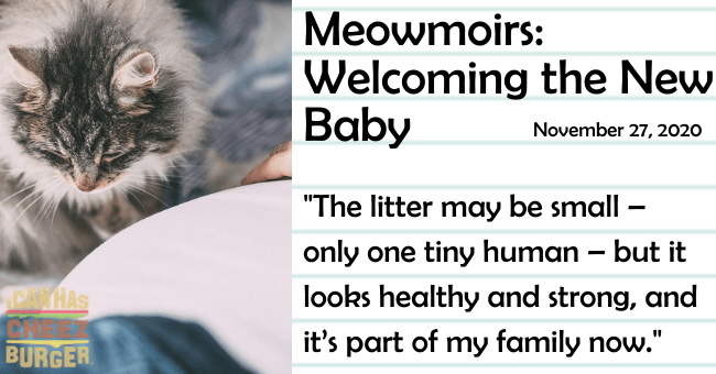 the eighth entry of meomoirs diary of a cat about the cat's reaction to a pregnant woman and a newborn baby thumbnail includes a picture of a cat near a pregnant woman's belly the name of the entry and a caption from it 'Cat - Meowmoirs: Welcoming the New Baby November 27, 2020 The litter may be small only one tiny human – but it PATHAS looks healthy and strong, and BURGER it's part of my family now.'