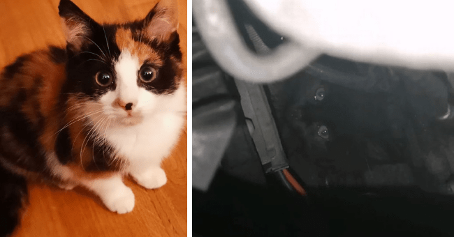 story about two kittens who were rescued by the same group one from inside of a car engine and the other from underneath an oil tank in an industrial site thumbnail includes two pictures including one of a black kitten inside of a car engine and another of a calico kitten