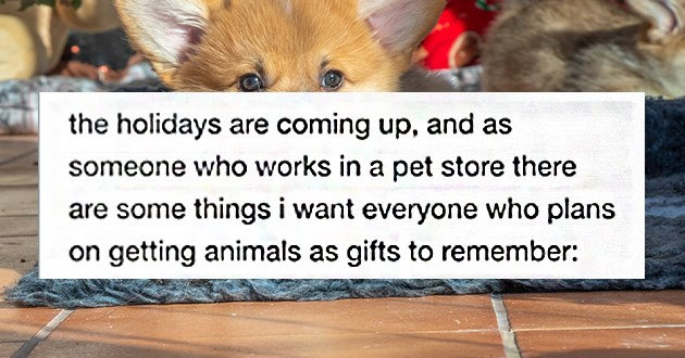 "thumbnail includes a backdrop image of a corgi and a snippet of a post ""the holidays are coming up, and as someone who works in a pet store there are some things i want everyone who plans on getting animals as gifts to remember"""