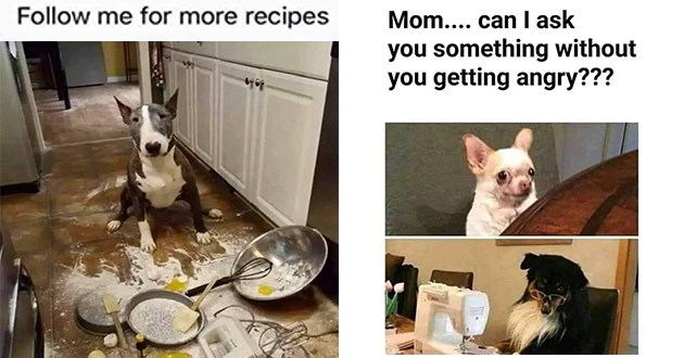 "funny classic and new dog memes - thumbnail of dog making a mess in the kitchen ""follow me for more recipes"" and two dogs ""mom...can i ask you something without you getting angry?"""