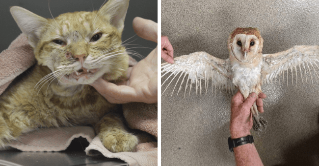 collection of stories of rescued animals and their rescuers thumbnail includes two pictures including a cat with a gunshot wound and another of an owl with singed wings