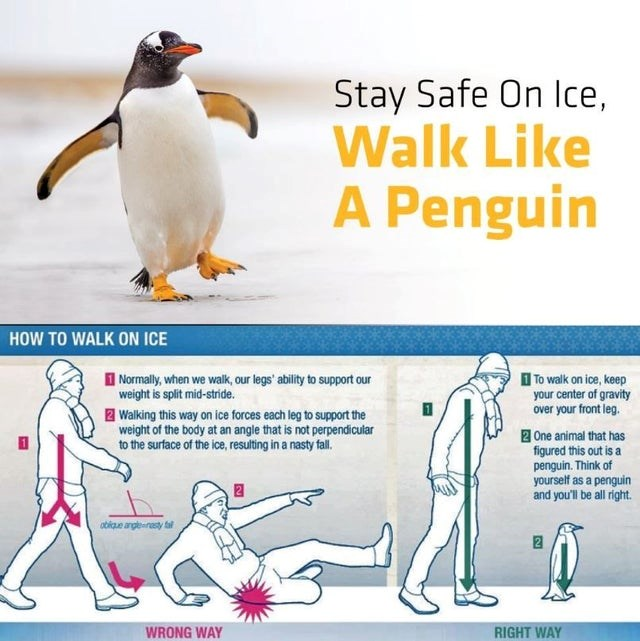 top infographics, cool, interesting | Penguin - Stay Safe On lce, Walk Like Penguin WALK ON ICE Normally walk, our legs' ability support our weight is split mid-stride walk on ice, keep center gravity over front leg. Z Walking this way on ice forces each leg support weight body at an angle is not perpendicular surface ice, resulting nasty fall. s nt 2 One animal has figured this out is penguin. Think yourself as penguin and be all right. obkue anglesresty tal 2 WRONG WAY RIGHT WAY