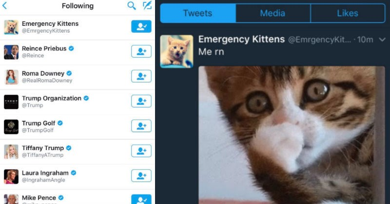 trump follows a cat twitter account and hilariousness insues
