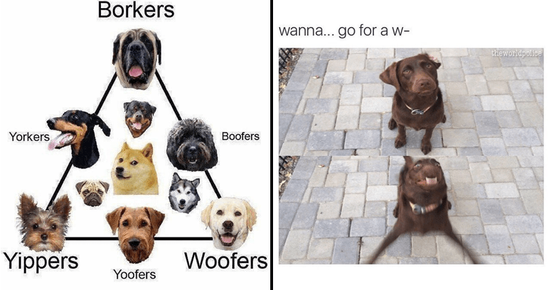 funny dog memes | Borkers Yorkers Boofers Yippers Woofers Yoofers diagram dog breeds by sound | wanna go w- walk theworldpolice dog getting into an excited stance
