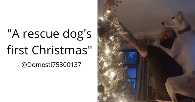 collection of wholesome and uplifting dog tweets thumbnail includes a picture of a man holding up a huge rescue dog with one hand and hanging up Christmas lights with the other hand 'Blue - A T DomesticGoddess T A @Domesti75300137 A rescue dog's first Christmas'