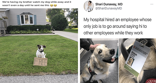 this week's collection of dog memes thumbnail includes two pictures including a dog with a sign that says 'free' 'Canidae - We're having my brother watch my dog while away and it wasn't even a day until he se' and another of a dog with an employee tag 'Dog breed - ... Shari Dunaway, MD @ShariDunawayMD My hospital hired an employee whose only job is to go around saying hi to other employees while they work THE ORIO STATE UNIVERSITY WEXNER MEDICAL CENTER Shiloh Justice Volunteer STAR Program LEYE'