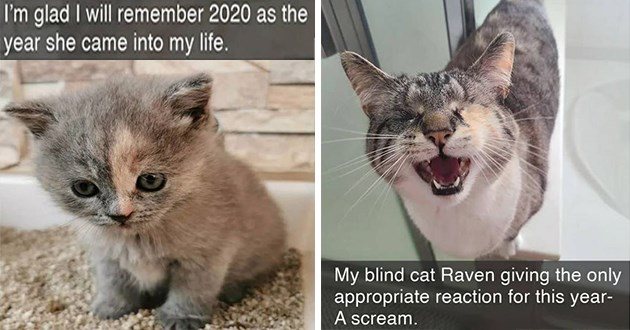 "fresh cat snapchats - thumbnail of two cat snap images one of a tiny kitten ""I'm glad I will remember 2020 as the year she came into my life"" and a blind cat screaming, ""My blind cat Raven giving the only appropriate reaction to this year - A scream."""