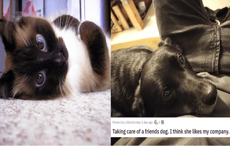 eye bleach nice things to look at cute baby animals cats and dogs adorable kittens and puppies small smol cow bunny to cleanse your soul remedy cure | Posted by u/DocDonkey 1 day ago 2 2 Taking care friends dog think she likes my company. Save