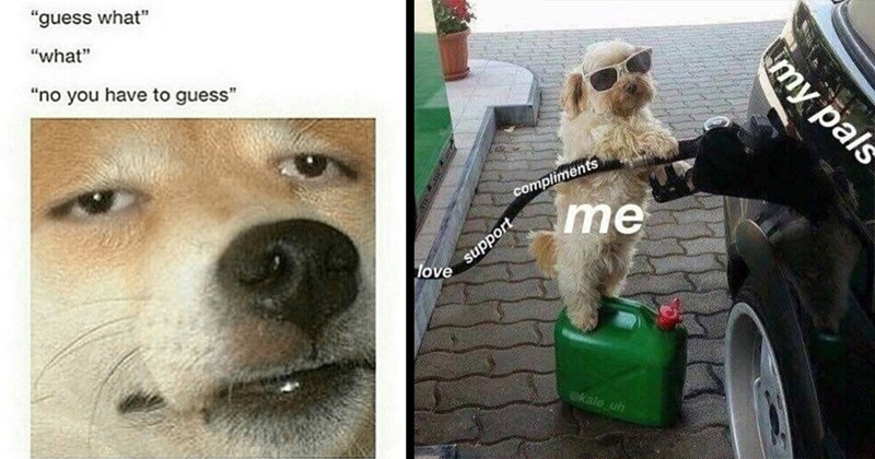 wholesome, stupid memes, pupper, dog memes, puppies, funny memes, cute, memes, doggo, doggo memes, wholesome memes, animals | guess what no have guess tired dog | compliments love support kale pals dog pumping gas into car
