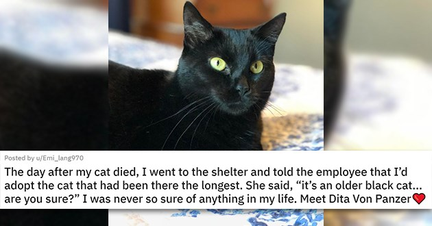 "all the newly adopted rescue animals of the week - thumbnail of black cat ""The day after my cat died, I went to the shelter and told the employee that I'd adopt the cat that had been there the longest. She said, ""it's an older black cat... are you sure?"" I was never so sure of anything in my life. Meet Dita Von Panzer"""