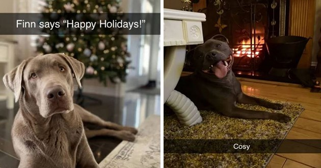 "festive and wholesome dog snapchats - thumbnail features two dog snaps one of dog in front of christmas tree ""finn says ""happy holidays"""" and one of a dog in front of a fireplace smiling ""cosy"""