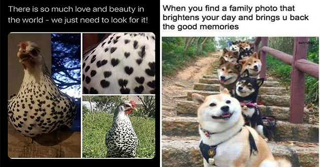"weeks best and cutest wholesome animal memes - thumbnail includes chicken with heart pattern ""there is so much love and beauty in the world - we just need to look for it!"" and a bunch of dogs lined up for a pic ""when you find a family photo that brightens your day and brings u back the good memories"""