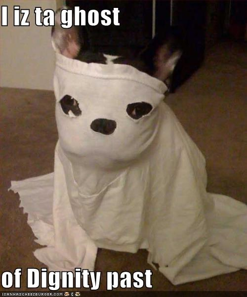 boston terrier dignity ghost - 1310421248