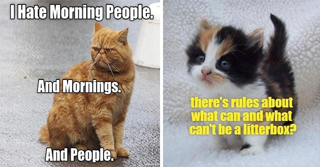 "original cat memes by i can has cheezburger users lolcats - thumbnail includes two cat memes one of an angry orange cat ""I hate morning people. And mornings. And people."" and meme of cute tiny kitten ""there's rules about what can and what can't be a litterbox?"""