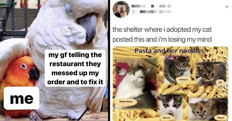 nice wholesome memes | my gf telling restaurant they messed up my order and too fix tiny birb hiding under the wing of a bigger bird | shelter where adopted my cat posted this and losing my mind Pasta and her noodles Lasagna Ziti Mama Pasta Ravioli Penne kittens named after types of pastas