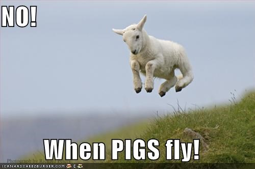 No When Pigs Fly Cheezburger Funny Memes Funny Pictures