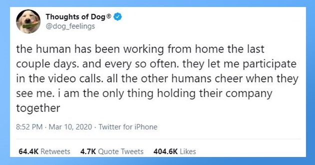 "top tweets from thoughts of dogs this year 2020 - thumbnail of thoughts of dog tweet ""the human has been working from home the last couple days. and every so often. they let me participate in the video calls. all the other humans cheer when they see me. i am the only thing holding their company together"""