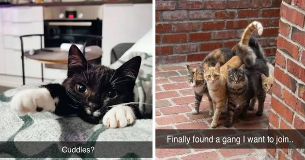 "fresh cat snapchats - thumbnail of two cat snap images one of a cute black cat ""cuddles"" and the other of a cute gang of cats ""finally found a gang i want to join"""