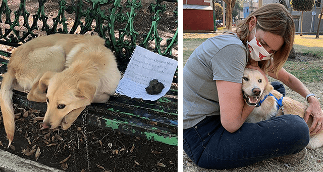 story about a puppy who was abandoned and tied to a park bench with a note thumbnail includes two pictures including the dog with the note on the park bench and another of the dog with its new owner