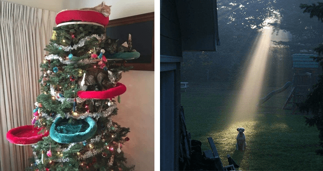 this week's collection of pictures that are worth more than 1000 words thumbnail includes two pictures including a Christmas tree with cat beds installed onto it and another of a dog in a field and a ray of sunshine pointing right onto it