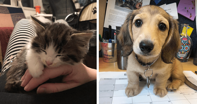 pictures of tiny kittens and puppies thumbnail includes two pictures including one of a puppy on some papers and another of a kitten sleeping on someone's hand