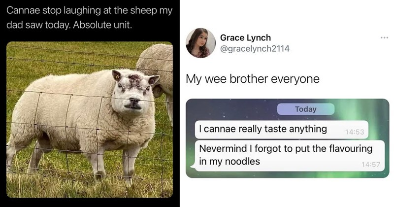 scottish twitter, scotland, britain, british twitter, funny tweets, twitter memes, memes, scottish humor, funny, lol, funny scottish tweets, witty, clever tweets | @ciderbams Cannae stop laughing at sheep my dad saw today. Absolute unit | Grace Lynch @gracelynch2114 My wee brother everyone Today cannae really taste anything 14:53 Nevermind forgot put flavouring my noodles