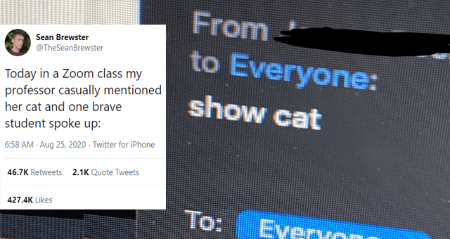 one hundred of the best cat tweets of 2020 thumbnail includes one tweet including a screenshot of a zoom chat screen that says 'to everyone show cat' and 'Text - 000 Sean Brewster @TheSeanBrewster Today in a Zoom class my professor casually mentioned her cat and one brave student spoke up: From to Everyone: show cat To: Everv one 6:58 AM · Aug 25, 2020 · Twitter for iPhone 46.8K Retweets 2.1K Quote Tweets 427.5K Likes'