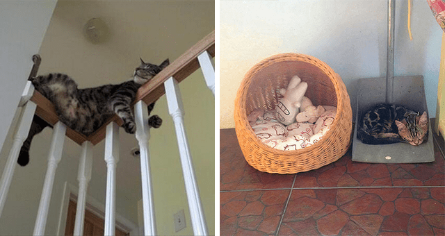 funny pictures of cats falling asleep in uncomfortable places and positions thumbnail includes two pictures including a cat sleeping inside of a dustpan instead of in its bed and another of a cat sleeping on a stairs' handrail