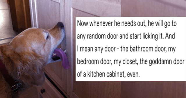 tumblr thread about a dumb dog who licks doors whenever he wants to go outside thumbnail includes a picture of a dog licking a closet door and the text 'Now whenever he needs out, he will go to any random door and start licking it. And I mean any door - the bathroom door, my bedroom door, my closet, the goddamn door of a kitchen cabinet, even'