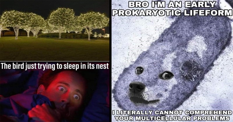 random memes, funny memes, shitposts, dank memes, good memes, weird memes, memes, funny, lol, relatable memes, funny tweets, twitter memes | bird just trying sleep its nest trees lit up by fairy lights and Seinfeld wide awake in bed | BRO AN EARLY PROKARYOTIC LIFE FORM LITERALLY CANNOT COMPREHEND MULTICELLULAR PROBLEMS doge