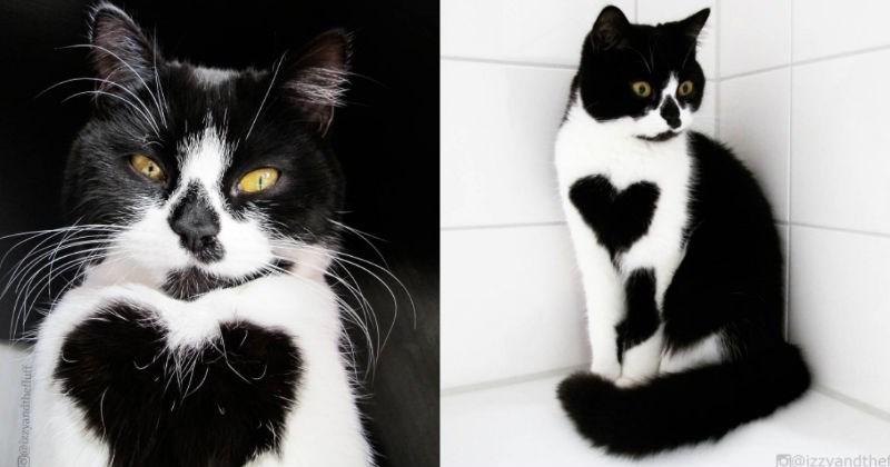 fur heart pattern cute love Cats - 1314309
