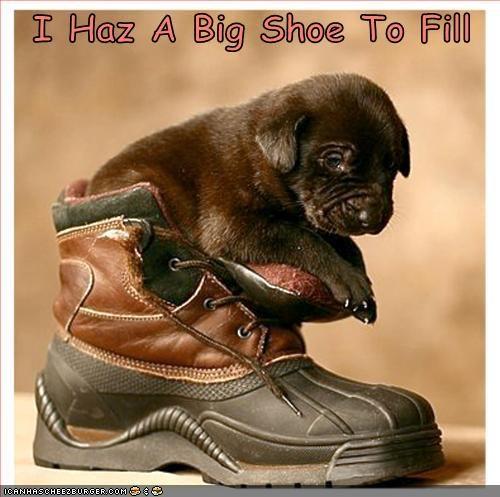 big puppy tiny whatbreed - 1314440448