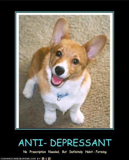 cute smile welsh corgi - 1314472704