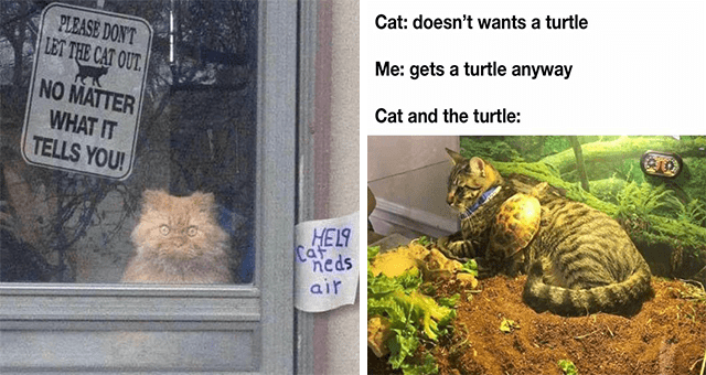 this week's collection of cat memes thumbnail includes two memes including one of a cat behind a window with two notes on it 'Vertebrate - PLEASE DON'T LET THE CAT OUT. NO MATTER WHAT IT TELLS YOU! HEL9 neds air' and another of a turtle sitting on a cat 'Organism - Cat: doesn't wants a turtle Me: gets a turtle anyway Cat and the turtle:'