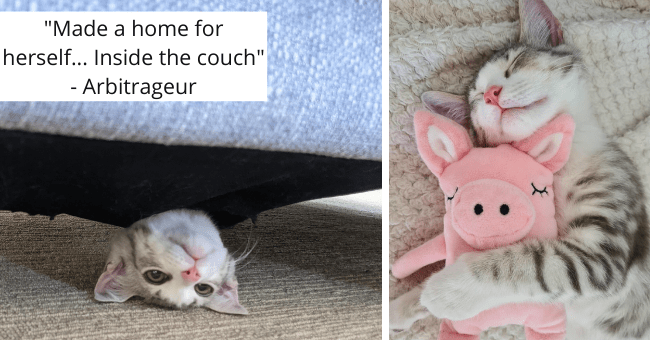 kitten who went viral on imgur for getting inside of the couch on her first day after adoption thumbnail includes two pictures including a picture of a kitten hugging a pig toy and another of a kitten inside of a couch peeking its head out 'Made a new home for herself... Inside the couch'