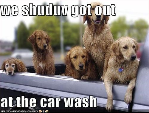 car golden retriever outside wash wet - 1315450112
