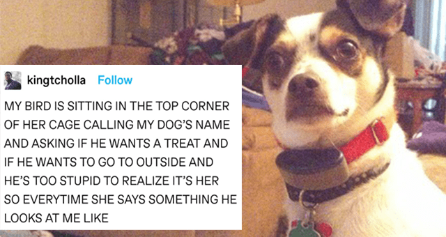 tumblr thread about a bird that keeps messing with the dog thumbnail includes a picture of a confused looking dog and the caption 'Text - kingtcholla Follow MY BIRD IS SITTING IN THE TOP CORNER OF HER CAGE CALLING MY DOG'S NAME AND ASKING IF HE WANTS A TREAT AND IF HE WANTS TO GO TO OUTSIDE AND HE'S TOO STUPID TO REALIZE IT'S HER SO EVERYTIME SHE SAYS SOMETHING HE LOOKS AT ME LIKE'
