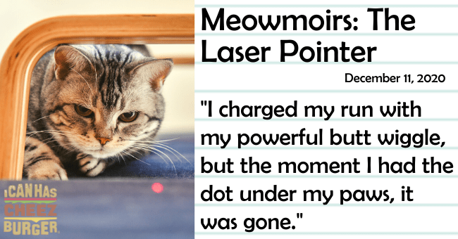 "The tenth entry of Meowmoirs diary of a cat thumbnail includes a picture of a cat looking at a red laser dot menacingly then name of the entry and a quote from it 'Text - Meowmoirs: The Laser Pointer December 11, 2020 ""I charged my run with my powerful butt wiggle, but the moment I had the dot under my paws, it ICAN HAS BURGER was gone.""'"