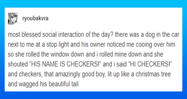 "wholesome and positive tumblr posts about dogs thumbnail includes one tumblr post 'Text - ryoubakvra most blessed social interaction of the day? there was a dog in the car next to me at a stop light and his owner noticed me cooing over him so she rolled the window down and i rolled mine down and she shouted ""HIS NAME IS CHECKERS!"" and i said ""HI CHECKERS!"" and checkers, that amazingly good boy, lit up like a christmas tree and wagged his beautiful tail Source: ryoubakvra 189,896 notes'"