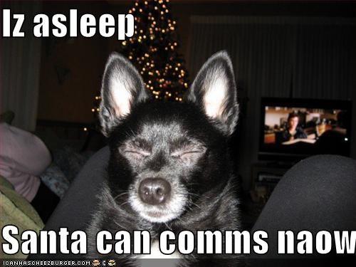 chihuahua christmas santa sleeping tiny tree - 1317312768