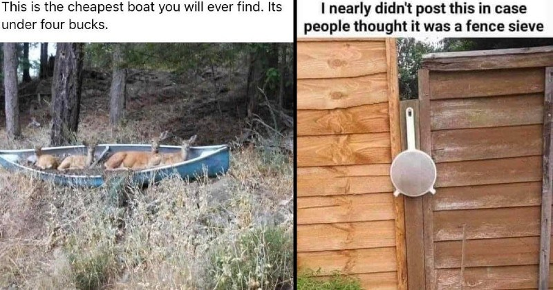 funny creative and dumb puns | This is cheapest boat will ever find. Its under four bucks. deer sitting in a stranded boat in the middle of a forest | nearly didn't post this case people thought fence sieve strainer hanging by a gate