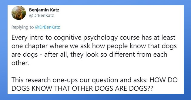 "wholesome research on whether or not dogs recognize other dogs merely by sight - thumbnail of tweet ""Every intro to cognitive psychology course has at least one chapter where we ask how people know that dogs are dogs - after all, they look so different from each other. This research one-ups our question and asks: HOW DO DOGS KNOW THAT OTHER DOGS ARE DOGS??"""