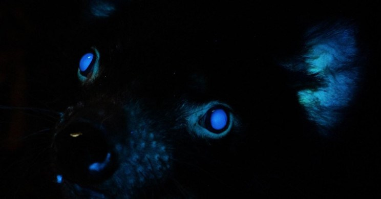 a scientific discovery found that some australian animals glow in the dark