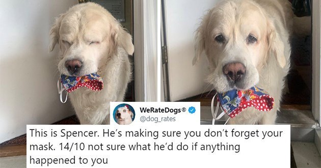"most wholesome we rate dog rates of the year - thumbnail of dog holding mask in mouth ""this is spencer. he's making sure you don't forget your mask. 14/10 not sure what he'd do if anything happened to you"""